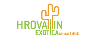 Hrovatin exotica - exotic plants catalog
